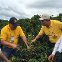 FNC Travels to Coffee Regions to Explain Aids to Producers to Face El Niño