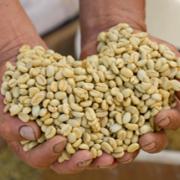 Aumentó 74% el registro de nuevos exportadores de café en mayo