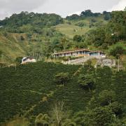 Producción de café colombiano cae 4% en los últimos 12 meses