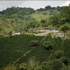 Coffee growers demand co-responsibility from the world industry in solution of crisis