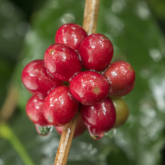 Quality and Differentiation are Two Key Factors in the Specialty Coffee Industry