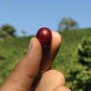 Producción de café colombiano crece 14,6% en enero