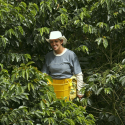 Coffee-Growing Women in the Spotlight