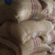 Colombia produjo 14 millones de sacos de café en últimos 12 meses
