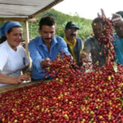 Producción de café de Colombia creció 3% en últimos 12 meses