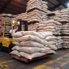 Producción de café de Colombia aumenta 12% en enero