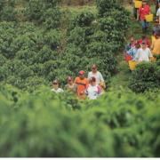 FNC monitorea efectos de lluvias y de paro cívico en Buenaventura sobre sector cafetero