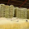 Producción de café colombiano crece 19% en septiembre