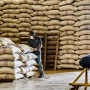 Colombia produjo 14,2 millones de sacos de café en el 2016