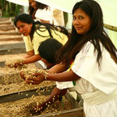 Organic Coffee, a Flagship and Differentiated Product of the Sierra Nevada