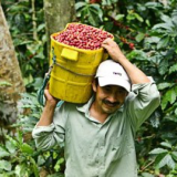 What Makes Café de Colombia Unique?