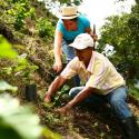 Glosario Cafetero - Parte II: Etapas del Cultivo