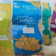 Cafés que recibieron los mejores precios y reconocimientos son variedad Castillo®