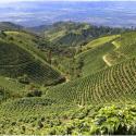 Leap in Productivity Makes Café de Colombia an Increasingly Sought-After Origin