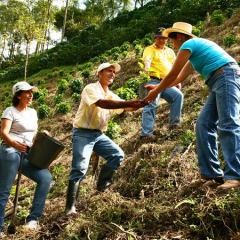 How is Price Transferred to Colombian Coffee Growers?