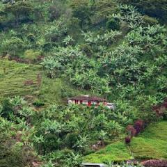 Café de Colombia desarrolla energías alternativas para una cadena de valor sostenible