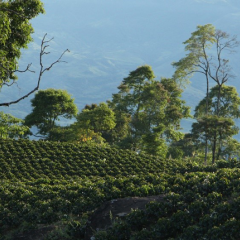 Café de Colombia, a Key Partner for Sustainability