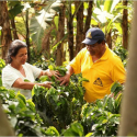 Colombian Coffee Growers Take Measures to Face El Niño