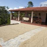 Santander declara zona de baja prevalencia de La Roya Del Cafeto