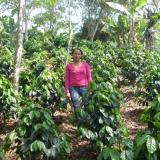 Cafés Orgánicos, calidad y compromiso con el medio ambiente