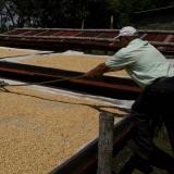 Secado del café, otra de las claves para que el Café de Colombia sea de alta calidad