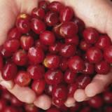Conozca más acerca de los cafés cultivados en Cauca y Nariño