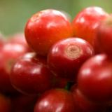 Producción y exportaciones de Café de Colombia siguen creciendo