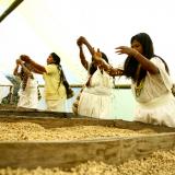 Medición de huella de carbono del café abrirá oportunidades para clientes y socios de FNC