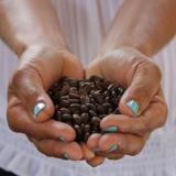 Nuevo servicio de exportación de café verde