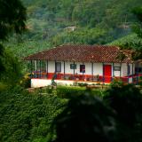 Microlotes, cafés gourmet de la caficultura colombiana