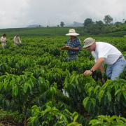 Federación de Cafeteros consolida sus programas de Cafés Sostenibles