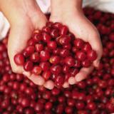 FNC ofrece gran variedad de cafés especiales y perfiles de taza