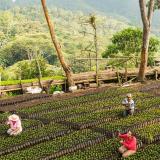 FNC gana dos premios ambientales Green Apple