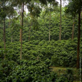 Colombian Coffee Production Grows 8% in Last 12 Months