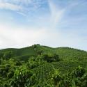 Se requiere acción conjunta para que el café sea sostenible: informe de la Universidad de Columbia
