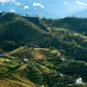 Over 1,100 lots will compete in 3rd  national quality competition 'Colombia, Land of Diversity'
