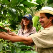$155 mil millones entregará el Gobierno nacional para apoyar al sector cafetero