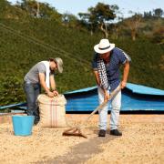 Producción de café de Colombia aumenta 1,2% en octubre