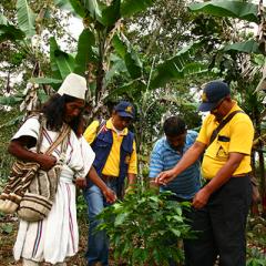 Sierra Nevada de Santa Marta, a Regional Origin of Organic Essence