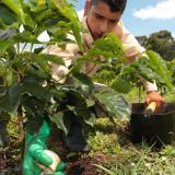 Cafeteros podrán financiar los fertilizantes y asegurar su productividad