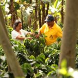 Positivo balance para la caficultura colombiana