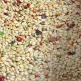 Prevenga el defecto de fermento en el café