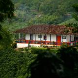 ¿Qué hace único al café colombiano en el mundo?