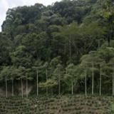 FNC y Pur Project sembrarán cinco millones de árboles nativos en Colombia