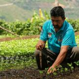 Programa de Reactivación ayuda con fertilizante a productores afectados por El Niño