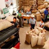 Trabajando por una caficultura productiva, sostenible y rentable