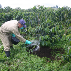 With two new general formulations, FNC facilitates fertilization to coffee farmers