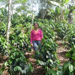 Organic Coffees, Quality and Commitment to the Environment