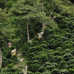 Sierra Nevada de Santa Marta, a Land where Specialty Coffee Grows