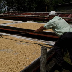 The Coffee Drying Process is another Key for the High Quality of Colombian Coffee.